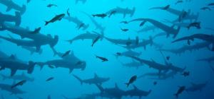 Haaien invasie in Florida