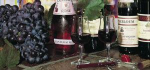 Wijn proeven in Port Elizabeth