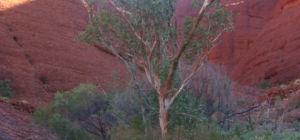 Hevige regenval treft het rode hart van Australië