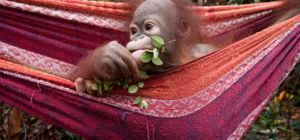 Win filmkaartjes voor Born to be Wild - Afrika.nl