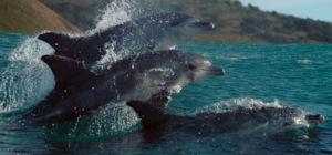 Win filmkaartjes voor Oceans: Our Blue Planet - Nieuw-Zeeland.nl