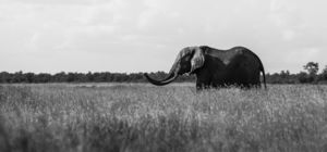 Win olifant reisknuffel - Zuid-Afrika.nl
