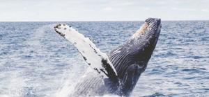 Wijnproeven en walvissen spotten op het Hermanus Whale Festival 2019