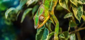 Win veldgids 'Amazon Wildlife' van Naturescanner - ZuidAmerika.nl