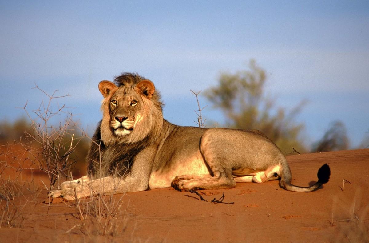 krugerpark alle tips, reviews en reizen vind je op zuid afrika nl