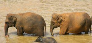 Thailand vernietigd miljoenen aan ivoor