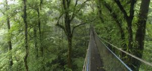 Monteverde Cloud Forest Reserve