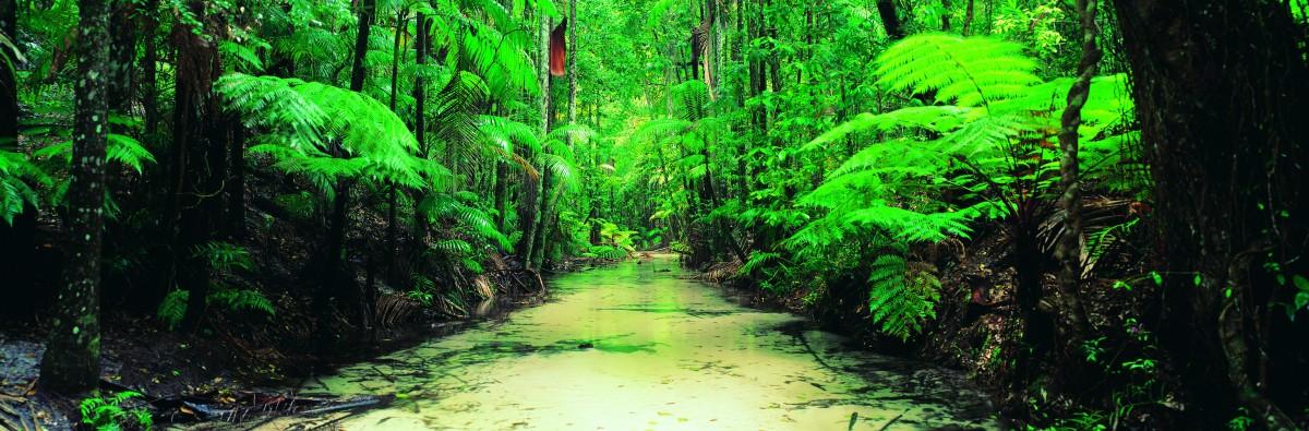 Daintree National Park Alle Tips Reviews En Reizen Vind
