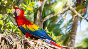 Ontvang de leukste Costa Rica reisroutes