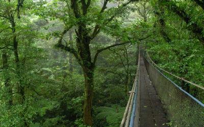 Arriba Costa Rica