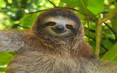 Single groepsreis Actief Costa Rica