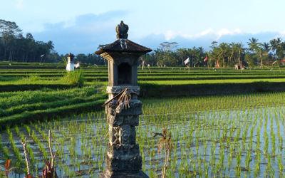 Groen, groener, groenst van Java naar Bali