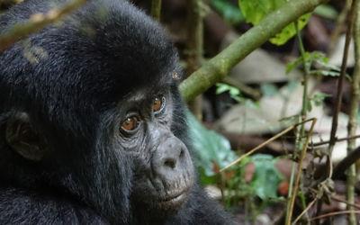Rondreis Oeganda, Tanzania & Zanzibar