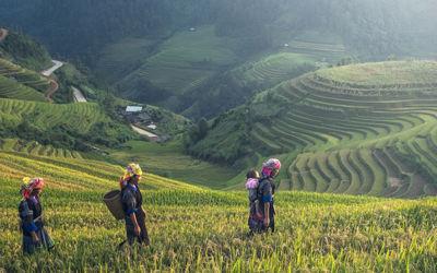 Javaans verleden, orang-oetans en Bali