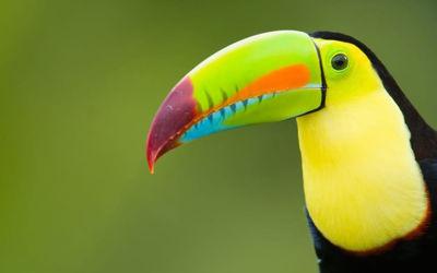 Groepsrondreis Natuurlijk Costa Rica