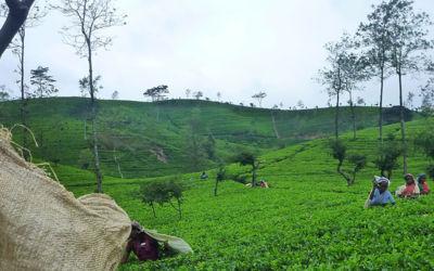 Eigenwijs Ceylon