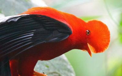 Groepsreis Colombia: Vogel- en natuurreis
