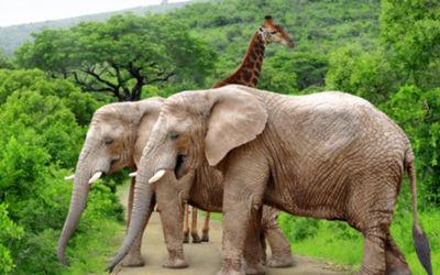 De Verborgen Plekjes van Zuid-Afrika