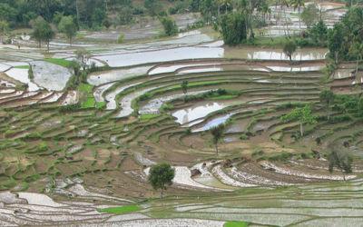 Groepsrondreis Sumatra - Java - Bali