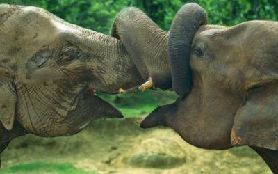 De Wonderen van Sri Lanka