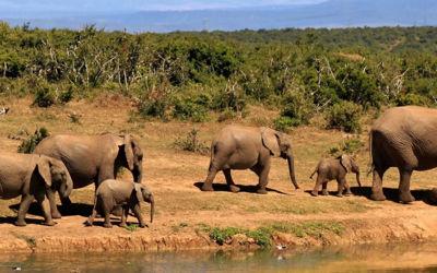 Wilde olifanten, de Tuinroute en wijnregio Stellenbosch